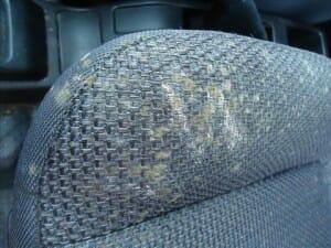 車内 カビ クリーニング